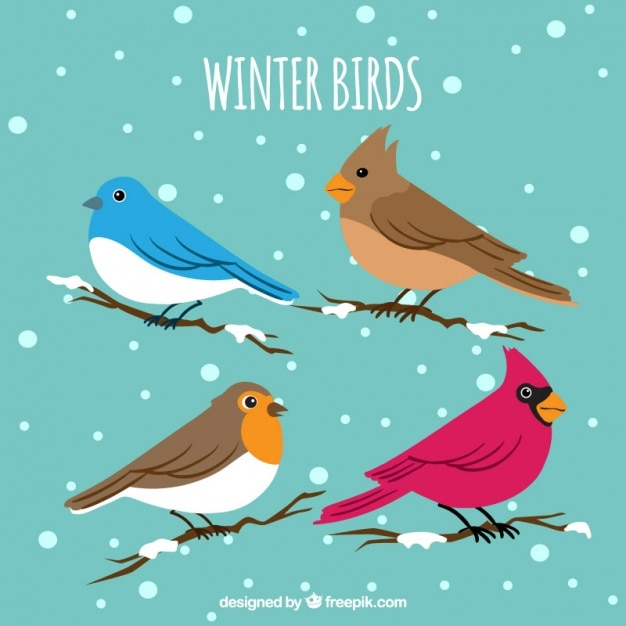 Collection of winter birds on branches