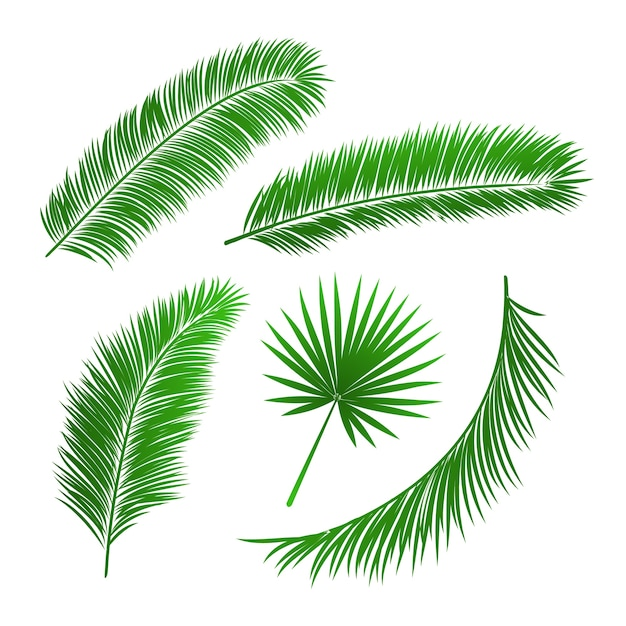 Collection of palm tree leaves isolated vector illustration Free Vector