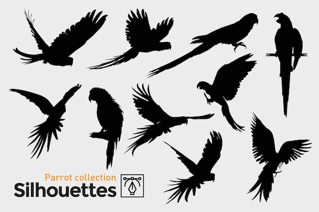 Collection of parrot silhouettes. exotic birds. Premium Vector