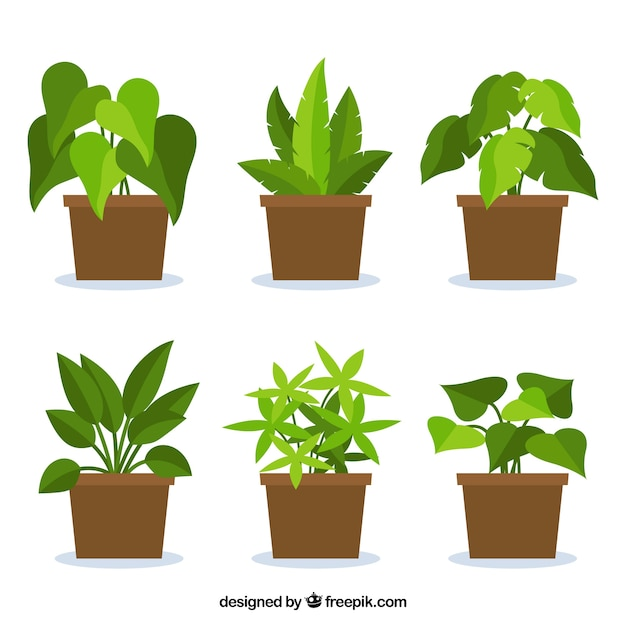 Collection of plants in flat design Premium Vector