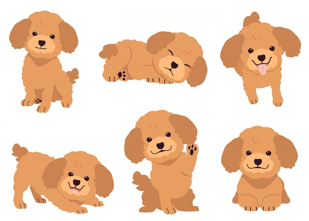 The collection of poodle in many action. Premium Vector