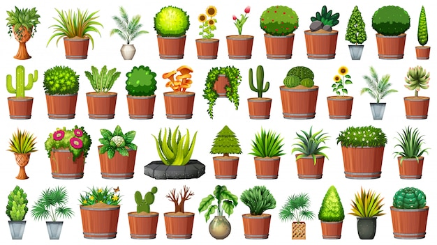 Collection of potted plants on white Free Vector