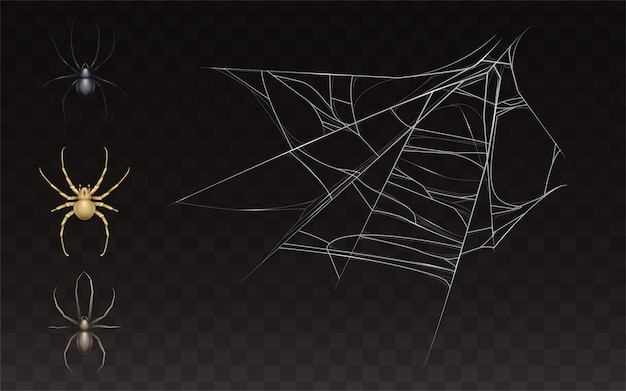 Collection of realistic cobweb and spider. web with insect isolated on dark background. Free Vector
