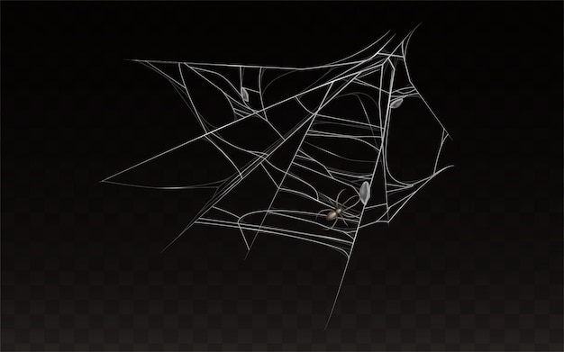 Collection of realistic cobweb with spider on it. Free Vector