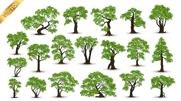 Collection  realistic  trees isolated on white background Premium Vector