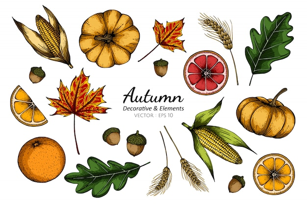 Collection set of autumn flower and leaves Premium Vector