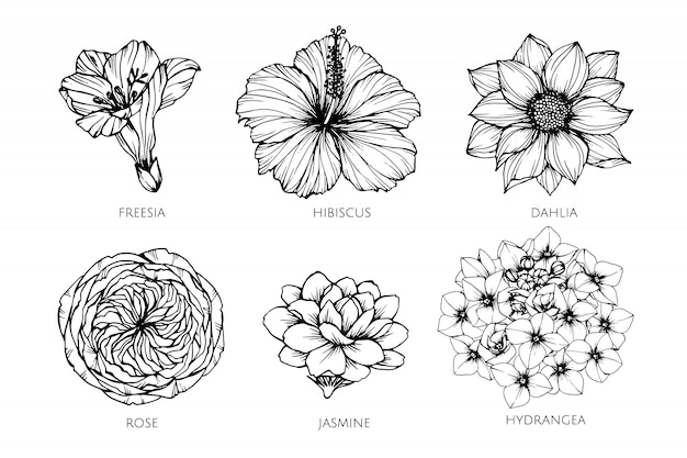 Collection set of flower drawing illustration. Premium Vector