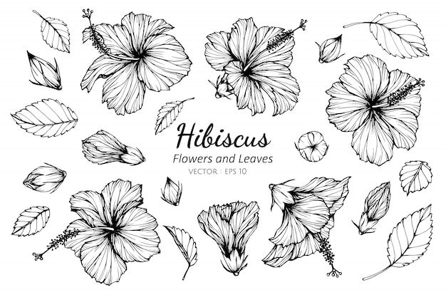 Collection set of hibiscus flower Premium Vector