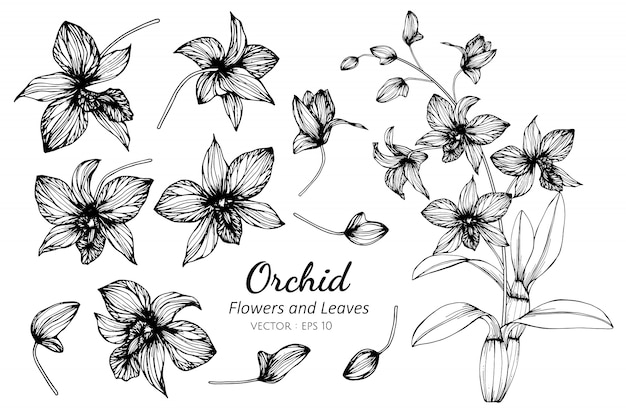 Collection set of orchid flower and leaves drawing illustration. Premium Vector
