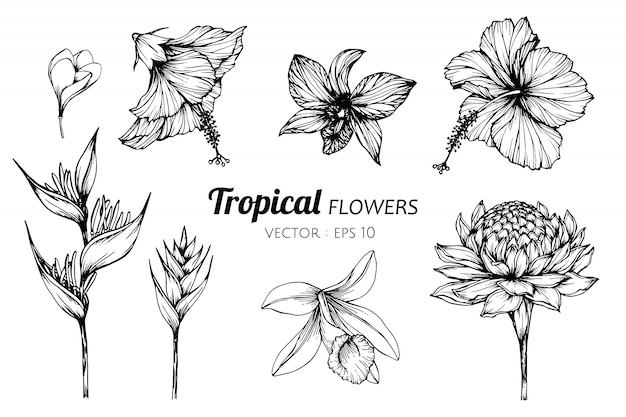 Collection set of tropical flower drawing illustration. Premium Vector