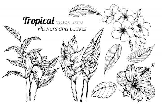 Collection set of tropical flower and leaves drawing illustration. Premium Vector