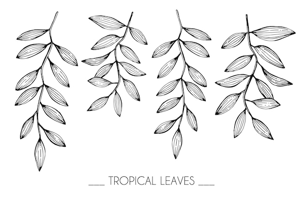Premium Vector Collection Set Of Tropical Leaves Drawing Illustration The set includes different types of leaves and plants. https www freepik com profile preagreement getstarted 2759365