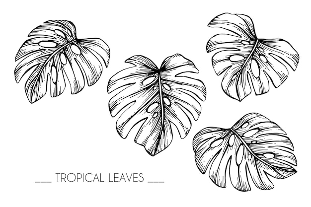 Premium Vector Collection Set Of Tropical Leaves Drawing Illustration Find over 100+ of the best free tropical leaves images. https www freepik com profile preagreement getstarted 2759373