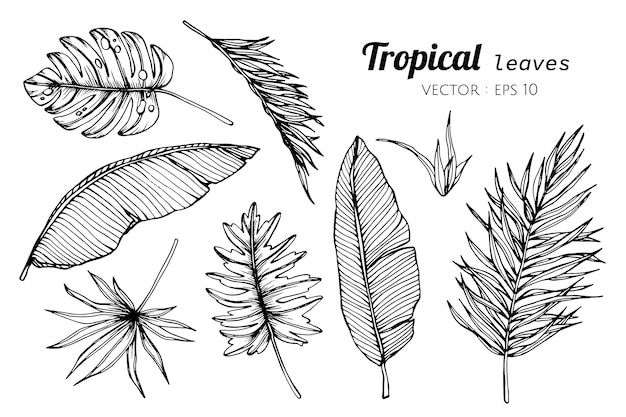 Collection set of tropical leaves drawing illustration. Premium Vector