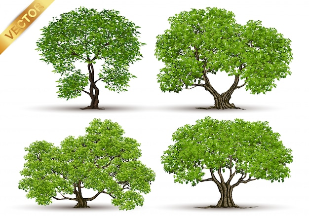 Collection of tree Premium Vector