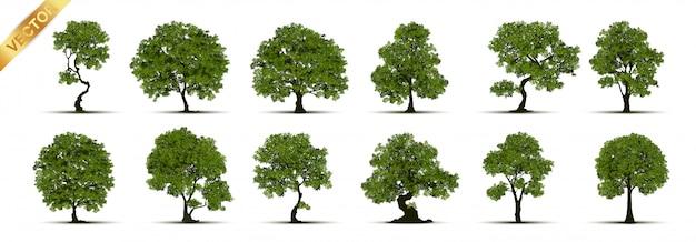 Collection of tree Premium Vector