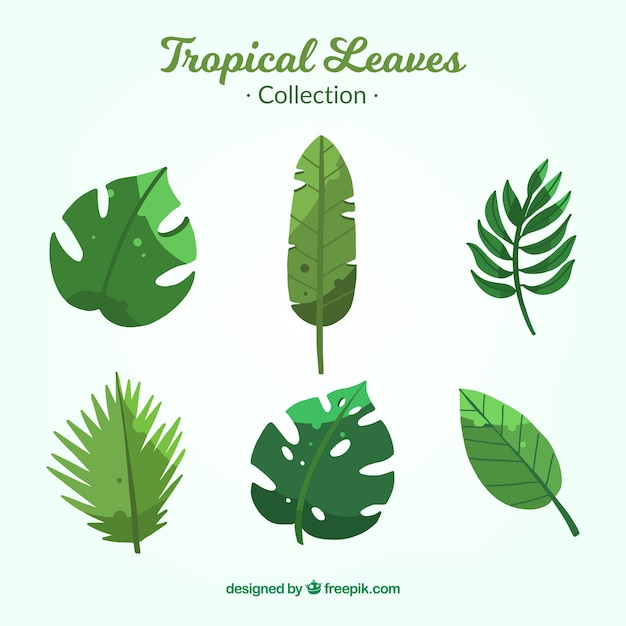 Free Vector Collection Of Tropical Leaves Tropical leaves png free download number 400209430,image file format is png,image size is 20 m,this image has been released since 12/07/2018.all prf license pictures and materials on this site are. freepik