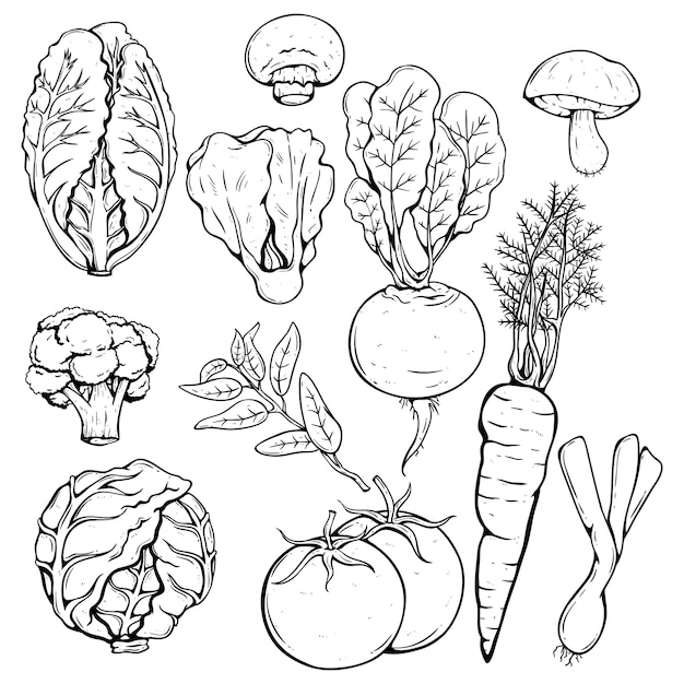 Collection of various fresh vegetables using hand drawn or sketch style Premium Vector