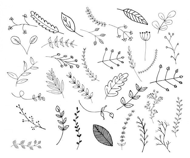 Premium Vector Collection Of Various Leaves Doodle