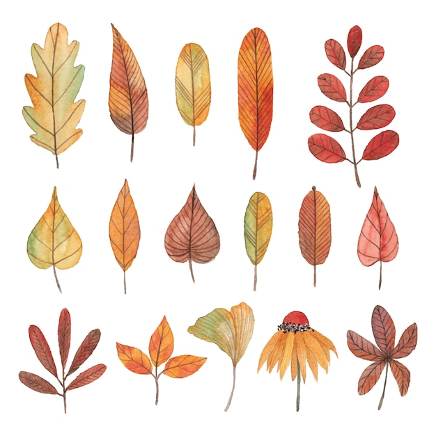 Collection of watercolor autumn leaves, flowers and branches Premium Vector
