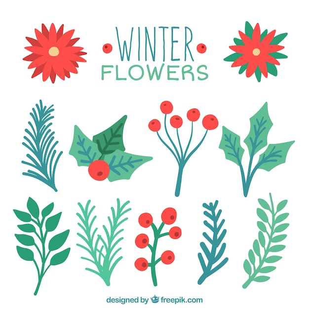 Collection of watercolor christmas plants Free Vector