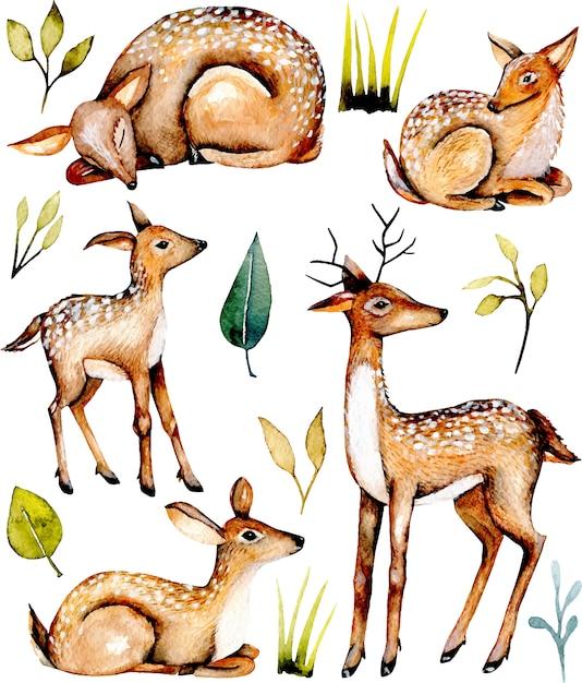 Collection of watercolor deers and baby deers Premium Vector