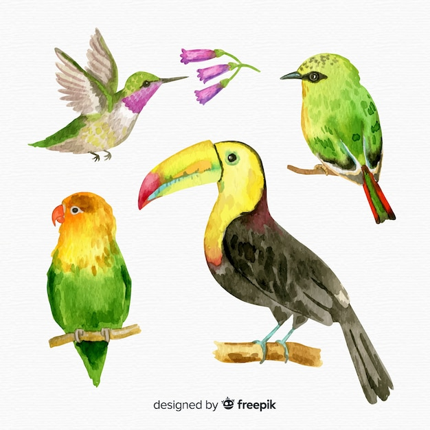 Collection of watercolor exotic bird Free Vector