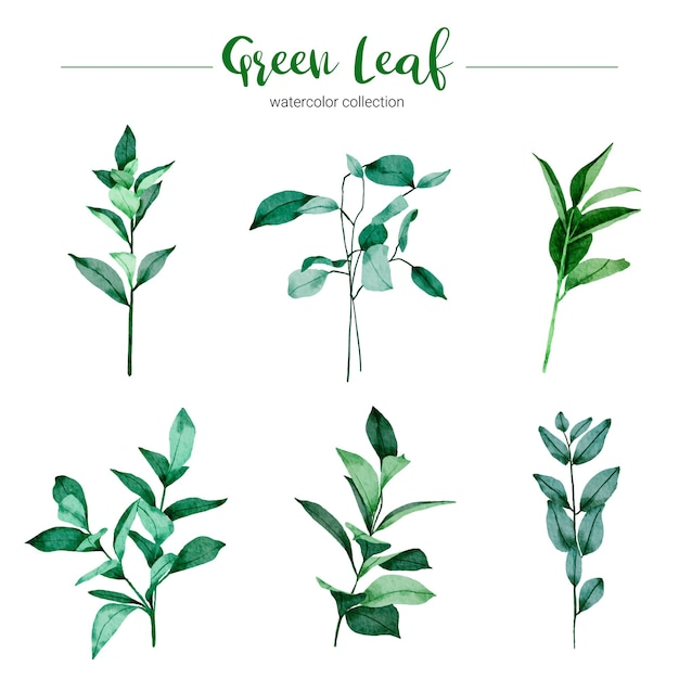 Collection of watercolor illustration green leaf Free Vector