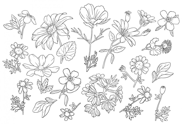 Collection wild flowers Free Vector