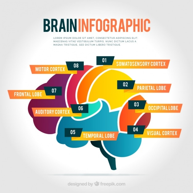 color brain infographics free vector