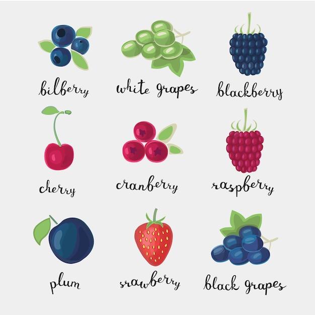 Цветной набор иллюстраций различных видов ягод Premium векторы