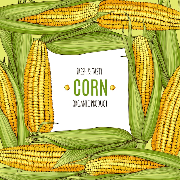 Colored background illustration with corn. design template with place for your text Premium Vector