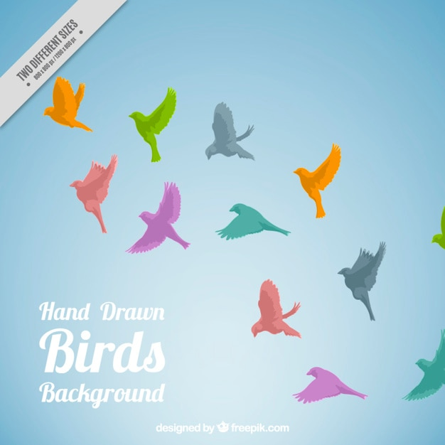 Colored birds flying background