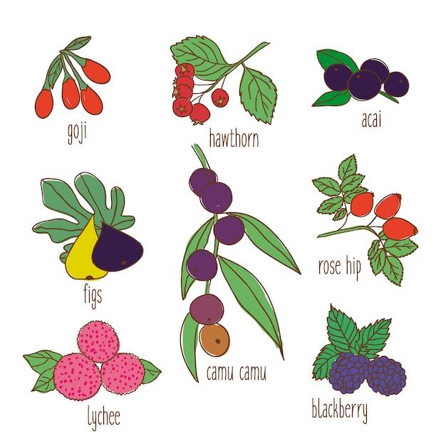 着色された手描きの植物性食品セット 無料ベクター