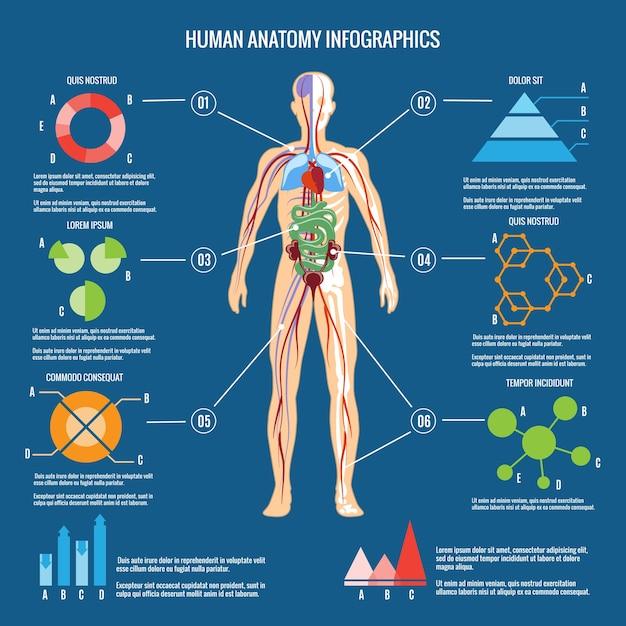 Цветные инфографики анатомии человеческого тела на сине-зеленом фоне. Бесплатные векторы
