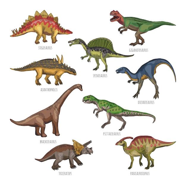 さまざまな恐竜の種類の色付きイラスト。ティラノサウルス、レックス、ステゴサウルス Premiumベクター