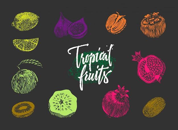 Коллекция цветных тропических фруктов Бесплатные векторы