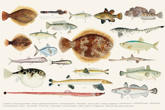 Colored vector illustration of fish drawing collection Free Vector