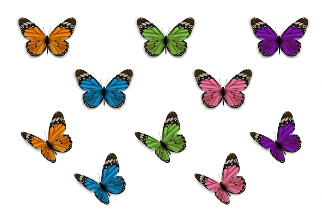 Colorflu butterfly on white background vector design Premium Vector