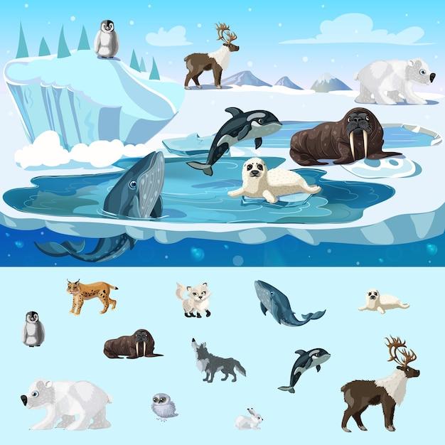 Красочная концепция дикой природы арктики Premium векторы
