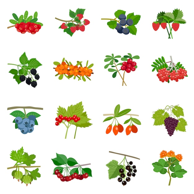 Colorful berries icons set Free Vector