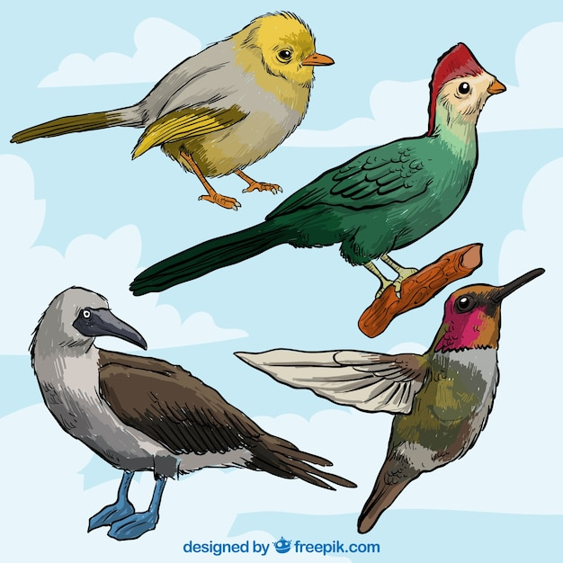 Colorful birds collection