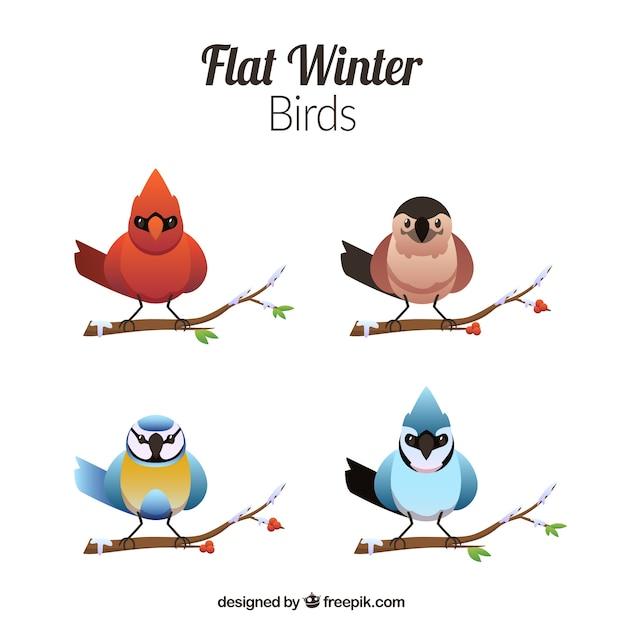 Colorful birds in flat design