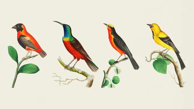 Colorful birds set Free Vector