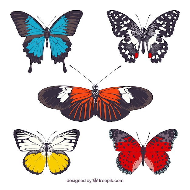 Colorful butterflies collection Vector | Free Download