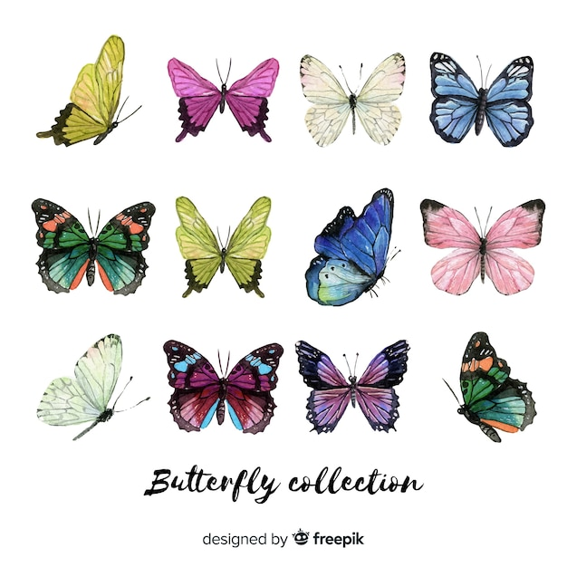 Colorful butterflies collection Free Vector