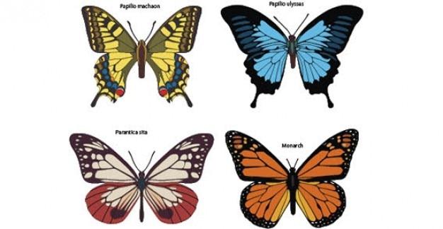 カラフルな蝶自由ベクトル 無料ベクター