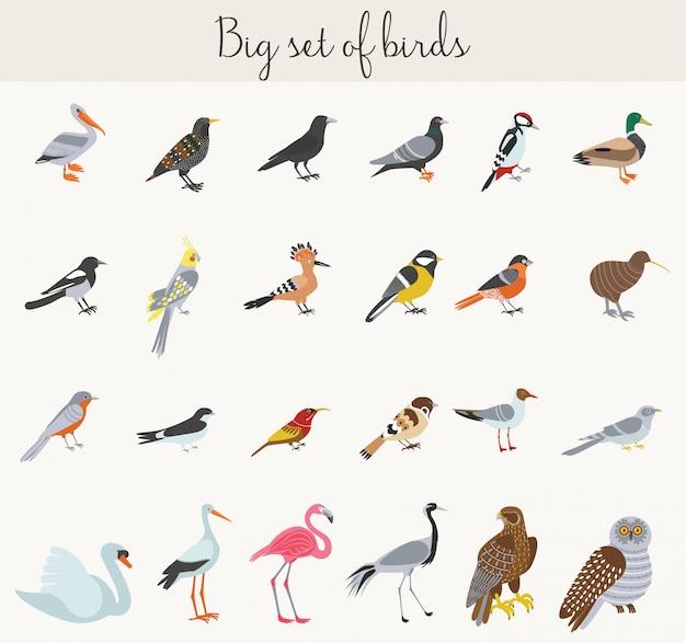 Colorful cartoon birds illustration icons Premium Vector