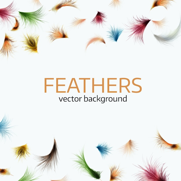 Colorful exotic feathers Premium Vector