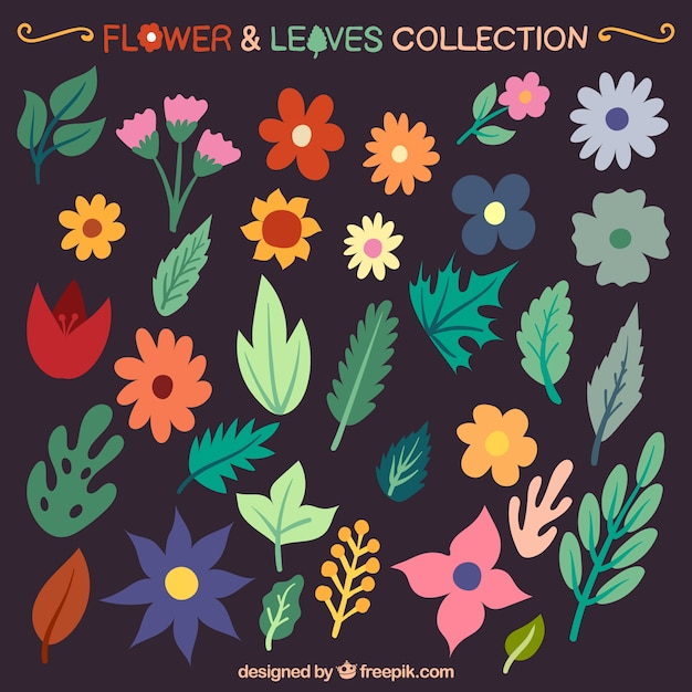 Colorful flowers and leaves Collection